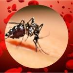 RS tem 237 casos confirmados de dengue em 2015
