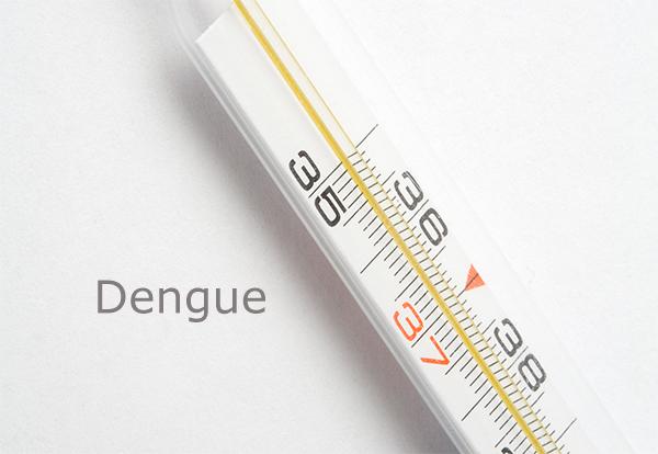 jardim ipe porto alegre:Porto Alegre tem 153 casos confirmados de dengue — Setor Saúde