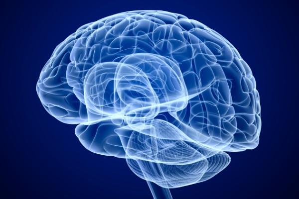 Estudo desenvolve novo mapa do cérebro e identifica 97 regiões desconhecidas